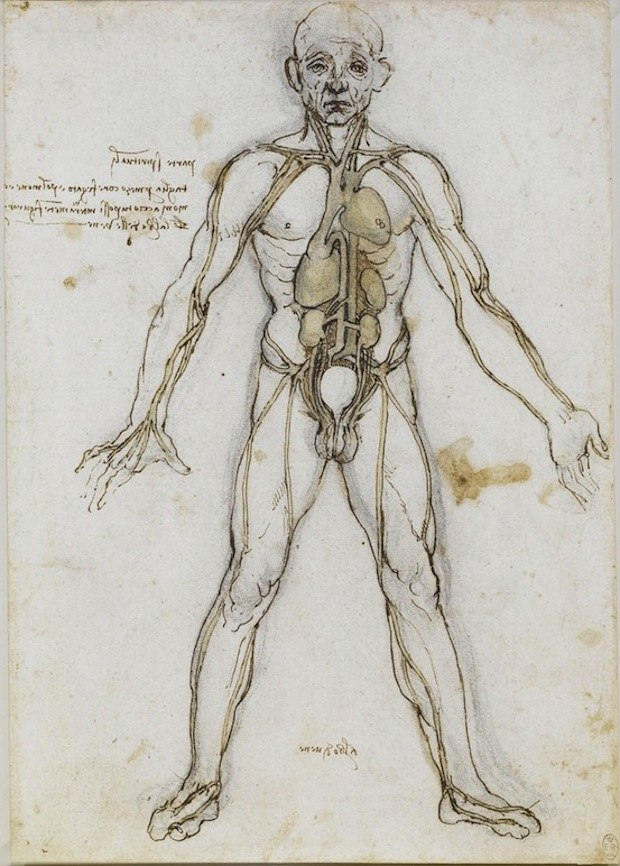 Anatomical Male Figure Showing Heart, Lungs, and Main Arteries