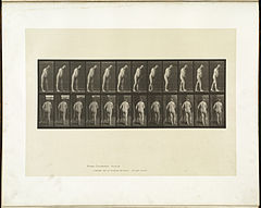 Animal locomotion. Plate 547 (Boston Public Library).jpg