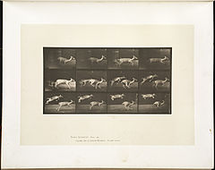 Animal locomotion. Plate 691 (Boston Public Library).jpg