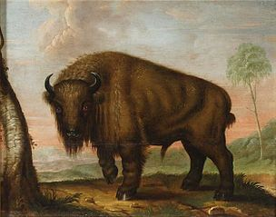 Wisent against the forest clearing.