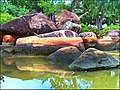 Anse Lazio, Seychelles - panoramio.jpg