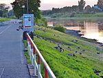 Anser anser in Pirna 121951056.jpg