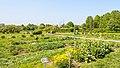 Apothecary garden Аптекарский огород.jpg