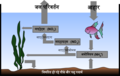 Aquarium Nitrogen Cycle-hi.png