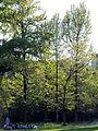 Arboretum Zürich 2014-04-23 18-23-39 (P7700).JPG