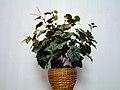 Artificial flower-Iran 08.jpg