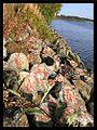 Artwar-stones.jpg