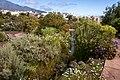 At Tenerife 2020 460.jpg