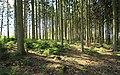 Auf dem Ziegenberg bei Zwönitz, Erzgebirgskreis 2H1A2281WI.jpg