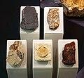 Augsburg Naturmuseum - fossils.jpg