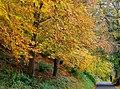 Autumn, Minnowburn, Belfast 2009-3 - geograph.org.uk - 1555491.jpg