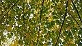 Autumn season in Butanic Garden فصل پاییز در باغ بوتانیکال تفلیس 37.jpg