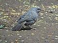 Avifauna (Bird).jpg
