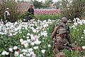 BLT 3-8 patrols Helmand's Green Zone 110407-M-SB982-097.jpg