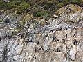 Bahía Ushuaia 249.JPG