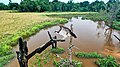 Balbuzard pêcheur de Nyonié - Gabon.jpg