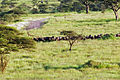 Balloon Safari 2012 06 01 3131 (7522675496).jpg
