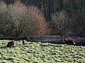 Balwen Sheep near Ebbesbourne Wake - geograph.org.uk - 682034.jpg