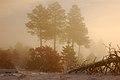 Bandelier - Fog (5291949090).jpg