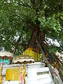 Bangkok Wat Pho P1100684.JPG