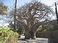 BaobabDakar.JPG