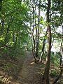 Barbora (rybník), cesta na břehu.jpg