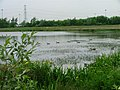 Barmston Pond - geograph.org.uk - 16431.jpg