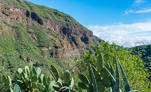 Barranco de Guayadeque 2016 05.jpg