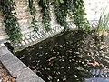 Bassin-fontaine de la montée de Saint-Germain (Beynost) - 2.JPG