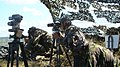 Batalionul 7 arpr 35.jpg