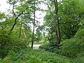 Baumschulenweg Späth-Arboretum 08.JPG