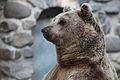 Bear IMG 9015.JPG