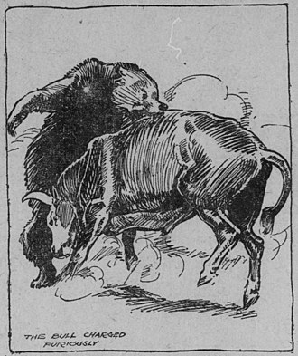 California grizzly bear - An illustration of a bear bull fight by HM Stoops. Published in The San Francisco Call on January 15, 1911.