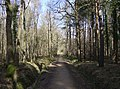 Beautiful bridleway - geograph.org.uk - 355123.jpg