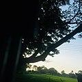 Beautiful of srilanka.jpg