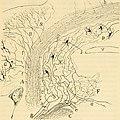 Beitrag zum Studium der Medulla Oblongata, des Kleinhirns und des Ursprungs der Gehirnnerven (1896) (14765120272).jpg