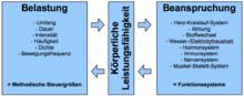 Belastungs beanspruchungs modell