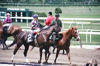 Belmont Park - Horses and lead ponies in a pre-race post parade at Belmont. The race track was the site of the first post parade in the United States.