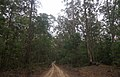 Benandarah NSW 2536, Australia - panoramio (49).jpg