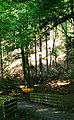 Bench In The Black Forest - panoramio.jpg
