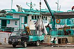 Benoa Bali Indonesia Unloading-Tuna-in-Benoa-Harbour-03.jpg