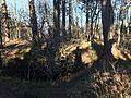 Berg und Ruine Wenzelstein (Schwäbische Alb) 08.JPG