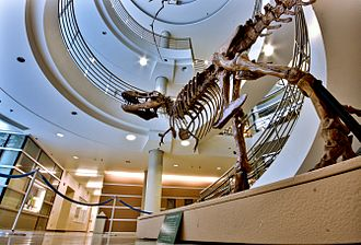 University of California, Berkeley - A T-Rex replica at the UC Museum of Paleontology