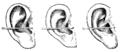 Bertillon - Identification anthropométrique (1893) 166 n&b.png