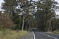 Bilpin NSW 2758, Australia - panoramio (22).jpg