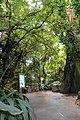 Biome tropical BM01.jpg