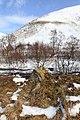 Birchwood near Ben Gulabin - geograph.org.uk - 1734684.jpg