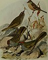 Bird lore (1914) (14752607101).jpg