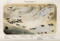 Birds typical of a beach in winter shown in their natural su Wellcome V0022287.jpg
