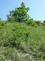 Bisamberg Westhang sl2.jpg